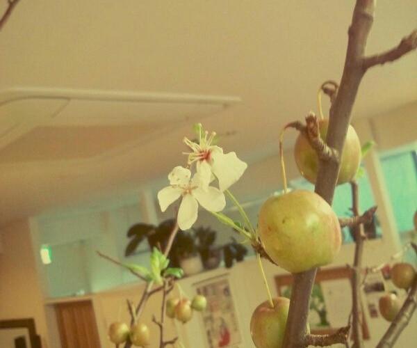 姫リンゴに…