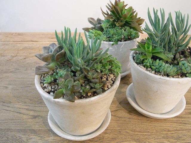 おうちの植物 元気ありますか?